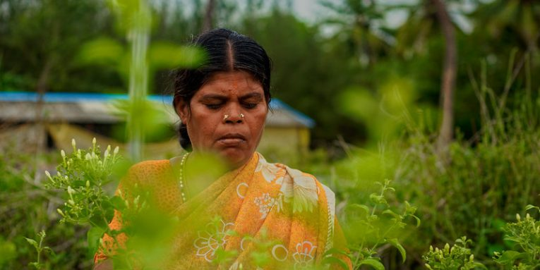 Rural Indian Women farming in flower field (Flickr / Nithi Anand)'
